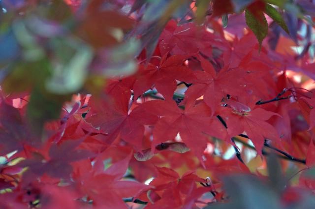 nikkou2001.jpg