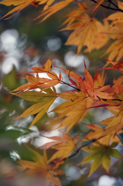 nikkou2003.jpg