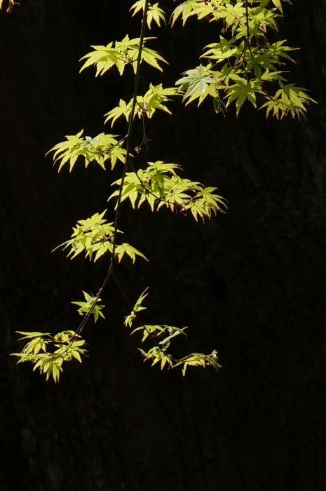 shigatu003.jpg