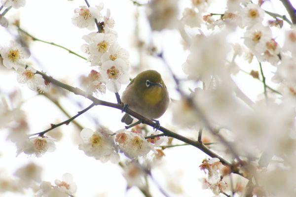 umemejiro003.jpg