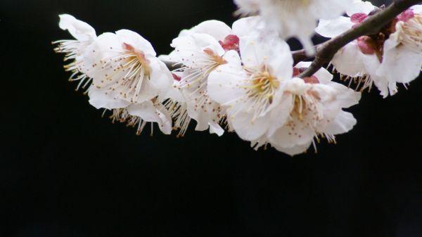 umemejiro004.jpg