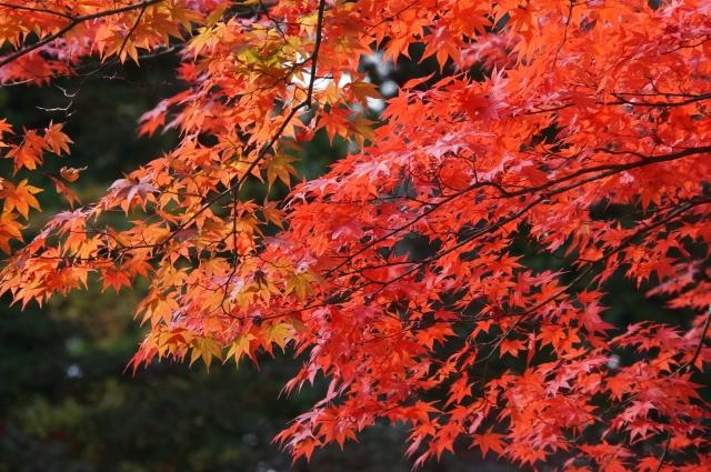 nikkou2002.jpg